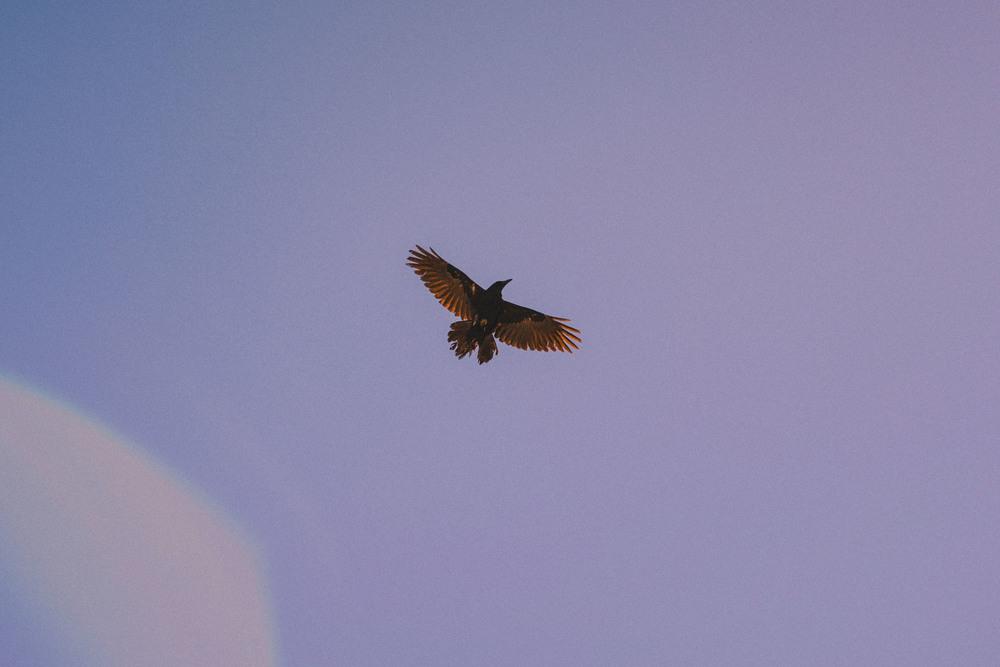 29 crow.jpg