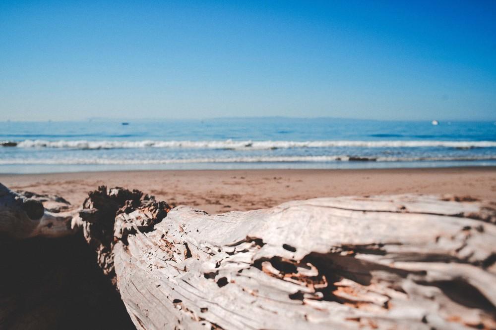 47 driftwood.jpg