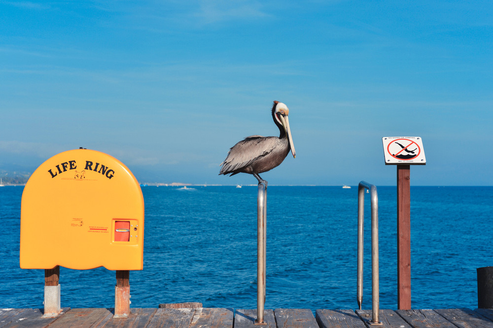 64 Pelican 3.jpg
