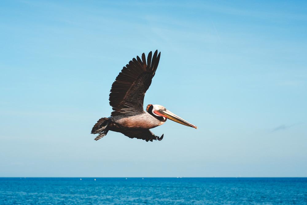 66 Pelican 5.jpg