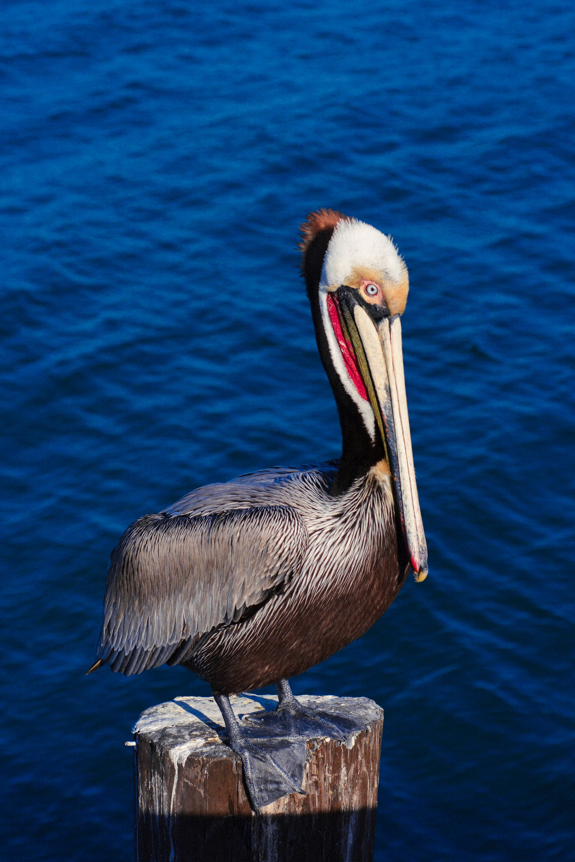 68 Pelican 7.jpg