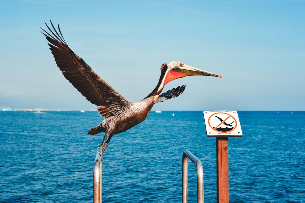 67 Pelican 6.jpg