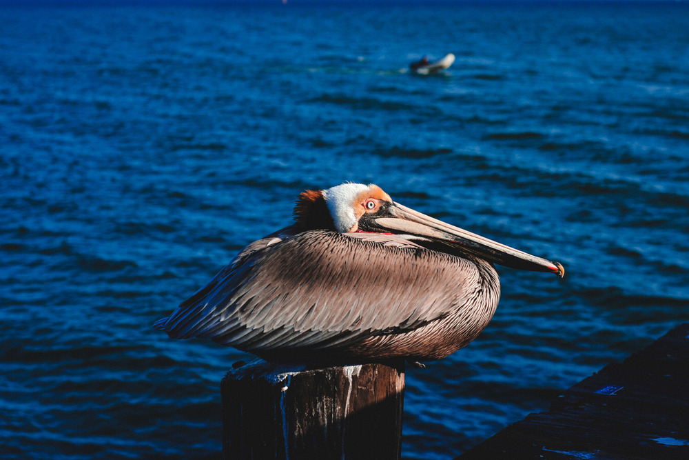 69 Pelican 8.jpg