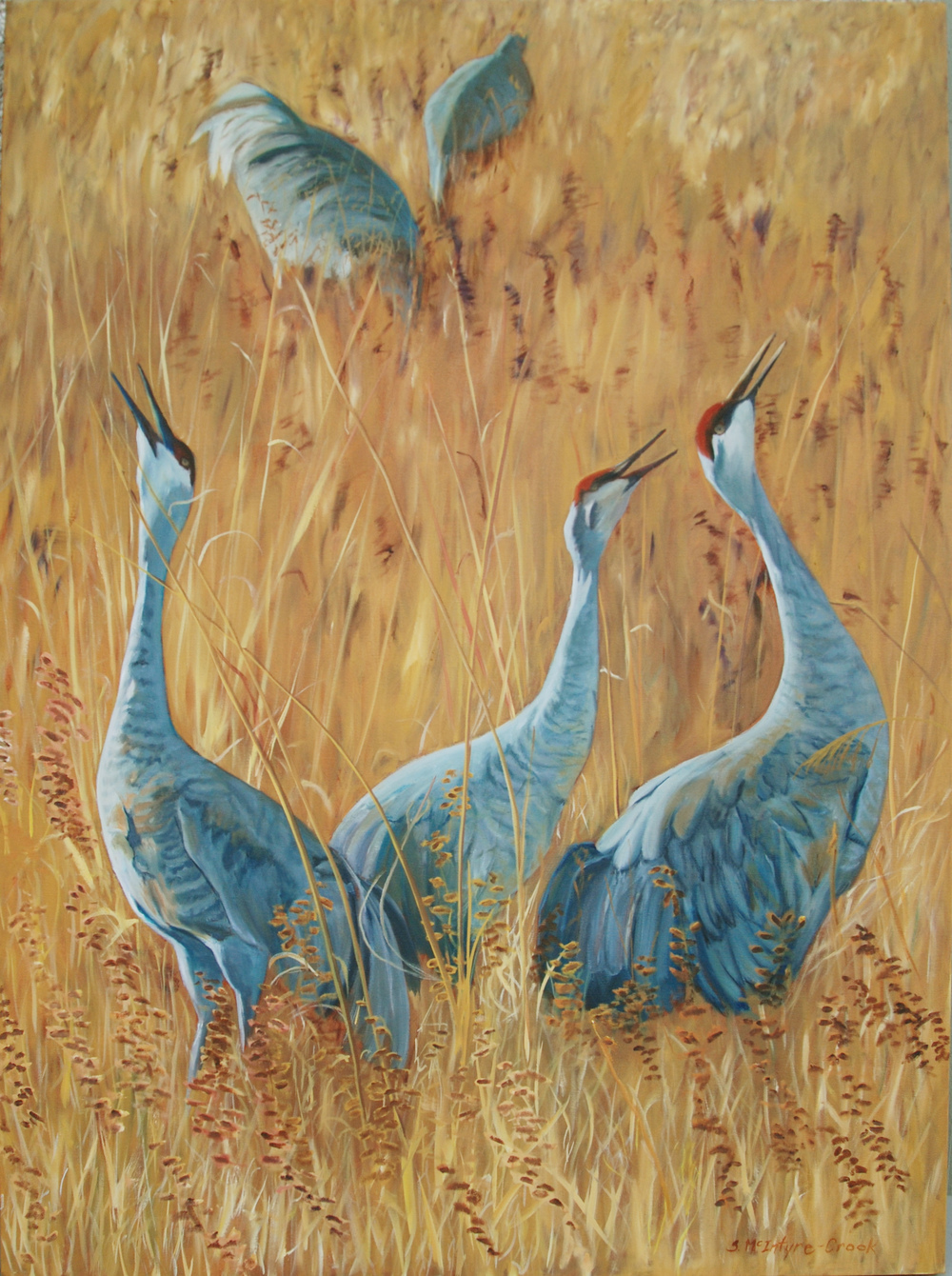 """Sandhill Cranes Calling  oil on canvas; 48 x 36; 2014  sold  Limited edition (50) 24"""" x 18"""" prints available: $150.00 ; Ultrachrome HDR ink"""