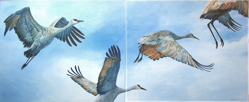 Sandhill Cranes Flying  oil on canvass; 4' x 10' on two canvases (4' x 5'); 2014  $6,000.00