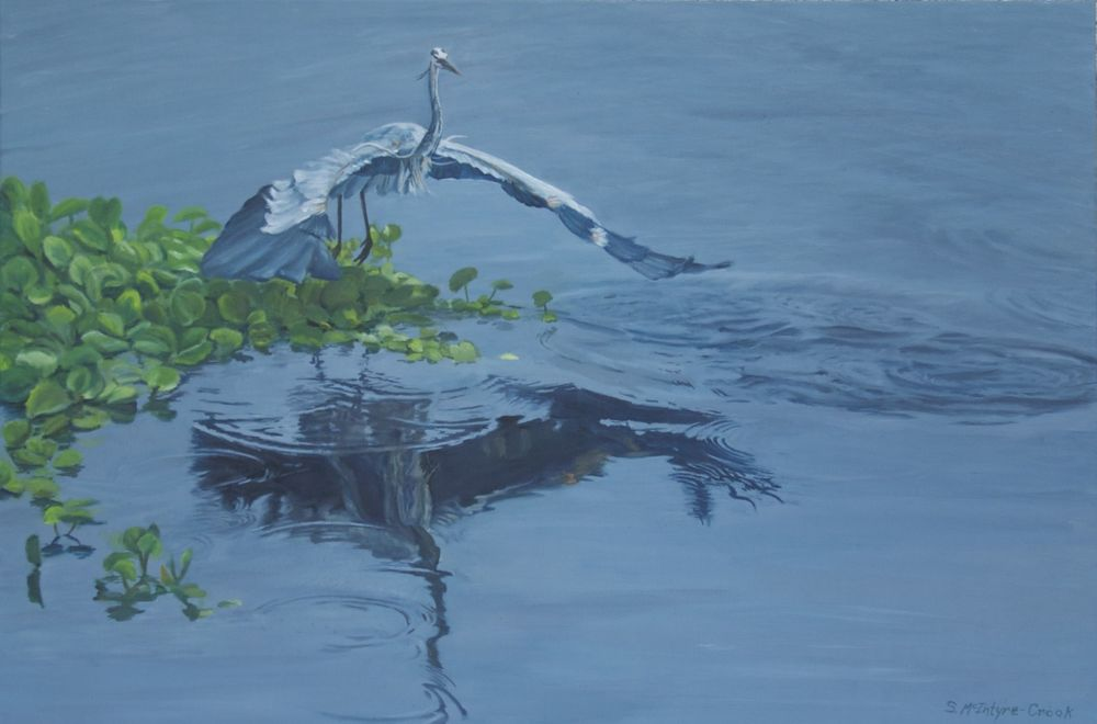"""Great Blue Heron at La Chua  oil on canvas; 24"""" x 36""""; 2015  in private collection"""