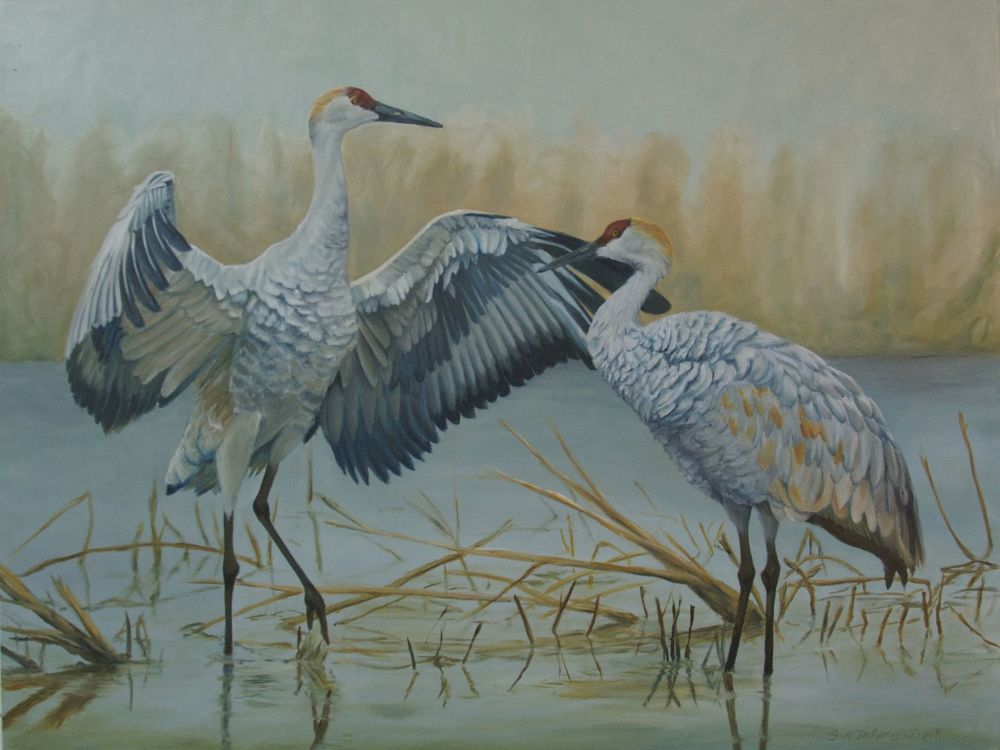 Sandhill Companions  oil on canvas; 36 x 40; 2015  Commission for special friends in Houston