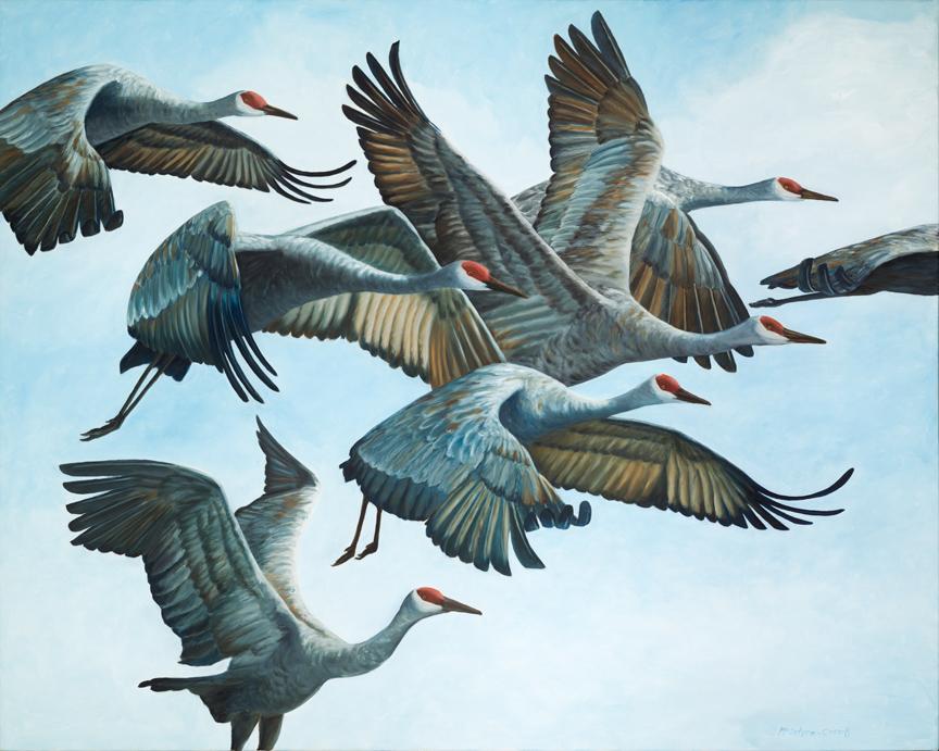 "Sandhill Cranes in Flock, Aloft  oil on canvas; 48"" x 60""; 2015  sold"