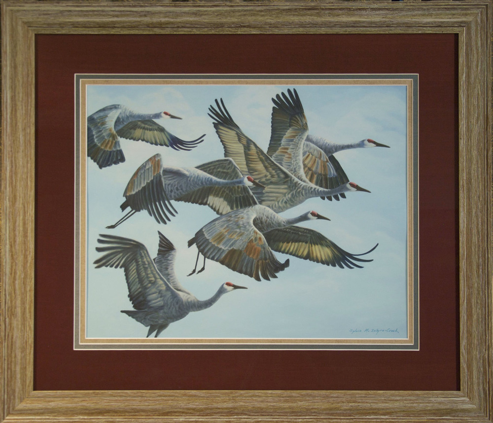 "Limited Edition Print: Sandhill Cranes in Flock, Aloft II; #2 of 30  print: 18"" x 23""; frame: 29.5"" x 34""; Ultrachrome HDR ink;  from original oil on canvass 'Sandhill Cranes in Flock, Aloft II'; 60x48  $550.00"