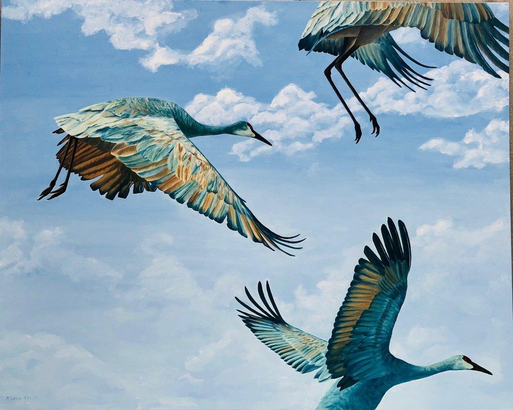 "Sandhill Cranes Ascending  oil on canvas; 48 x 60"" 2018  Sold"