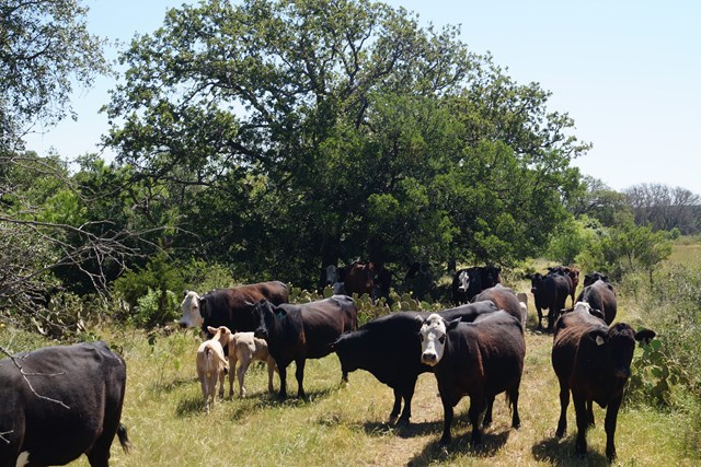CAVE CREEK RANCH200+ ACRES - GILLESPIE COUNTY