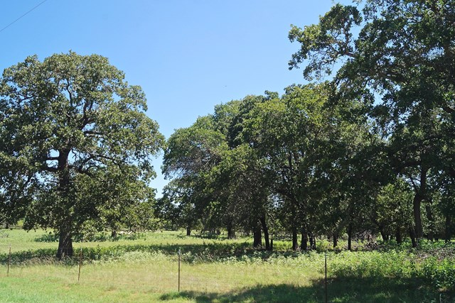 TRIPLE CREEK AREA    15 ACRES    GILLESPIE COUNTY