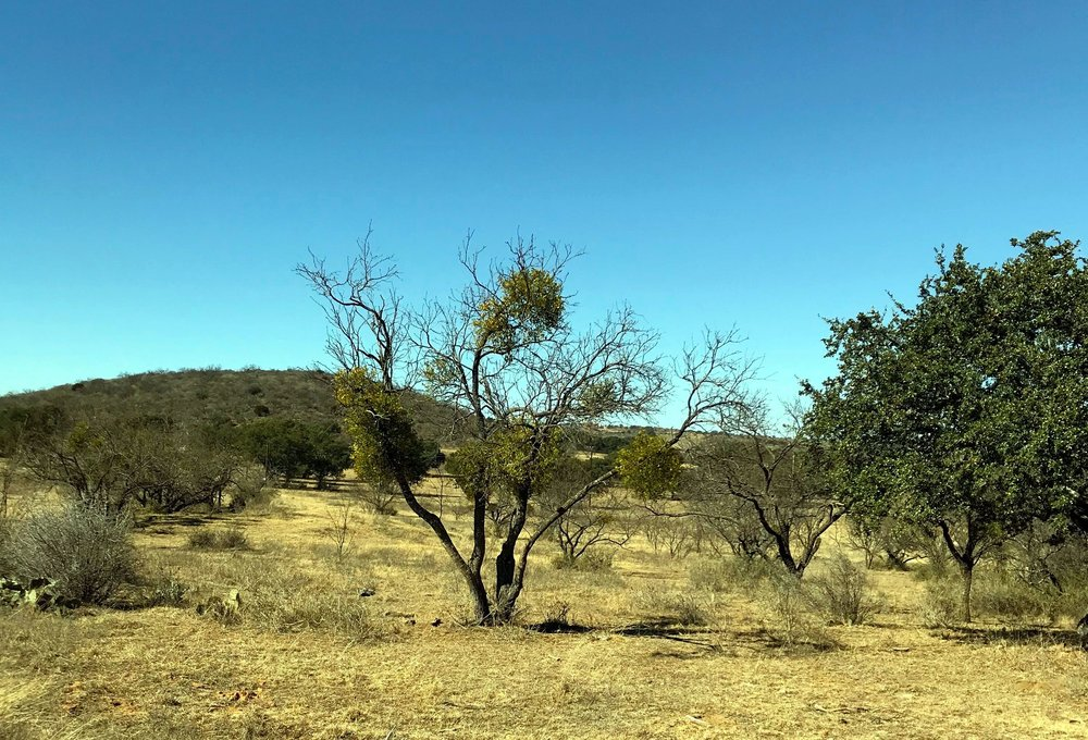 TRACT #9 4.30 ACRES $56,000  LEVEL WITH VIEW OF TODD MT.