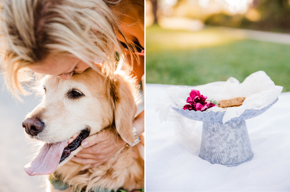 charleston pet photographer