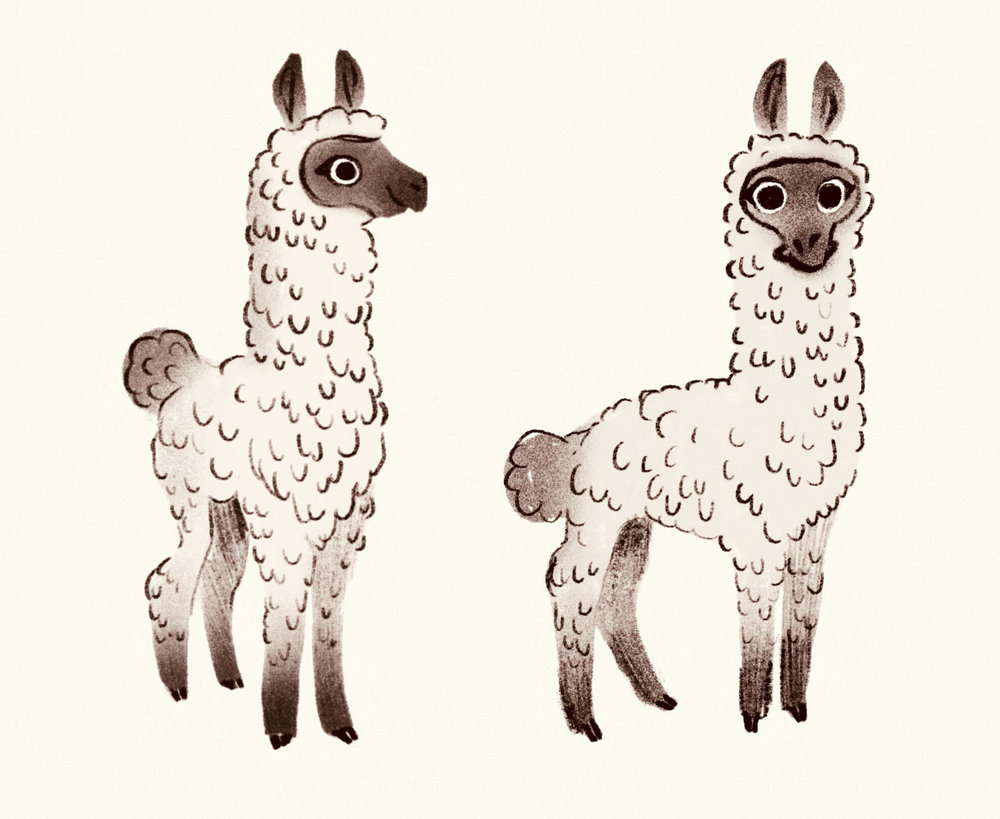 1Karly Catto Llama Sketches.jpg