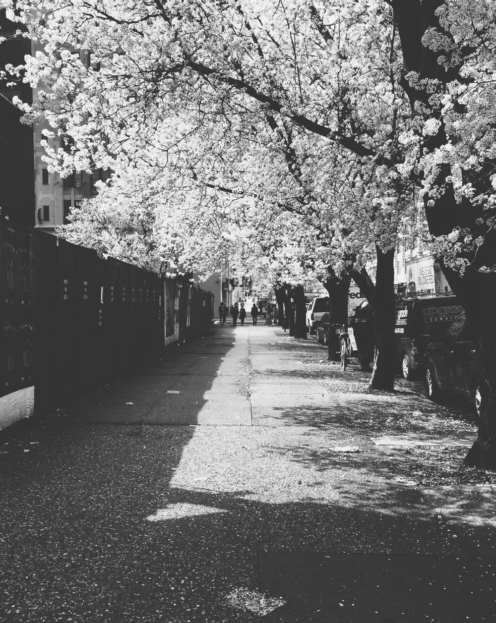 Varick Street spring time