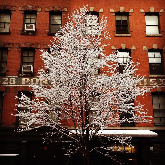 Tree in #tribeca #nyc