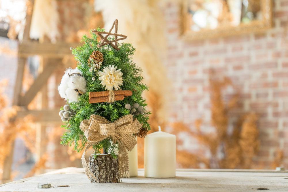 耶誕小樹.jpg