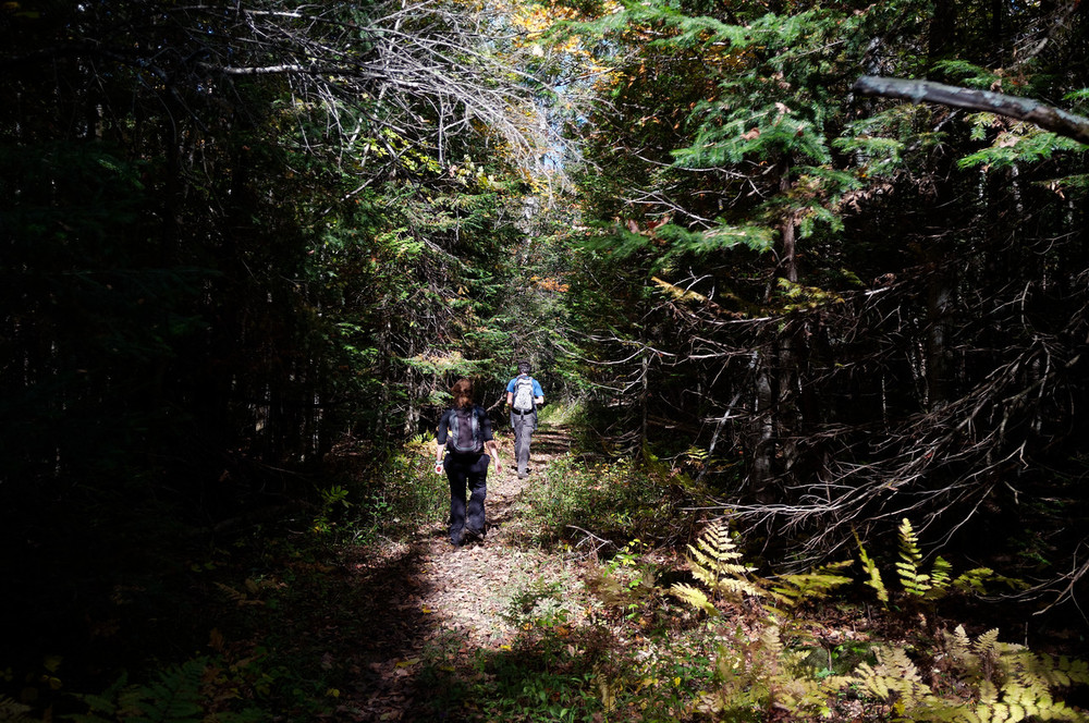 There was no straight forward way to get back on to the escarpment so we had to circle around the marsh and through some dark wooded area.