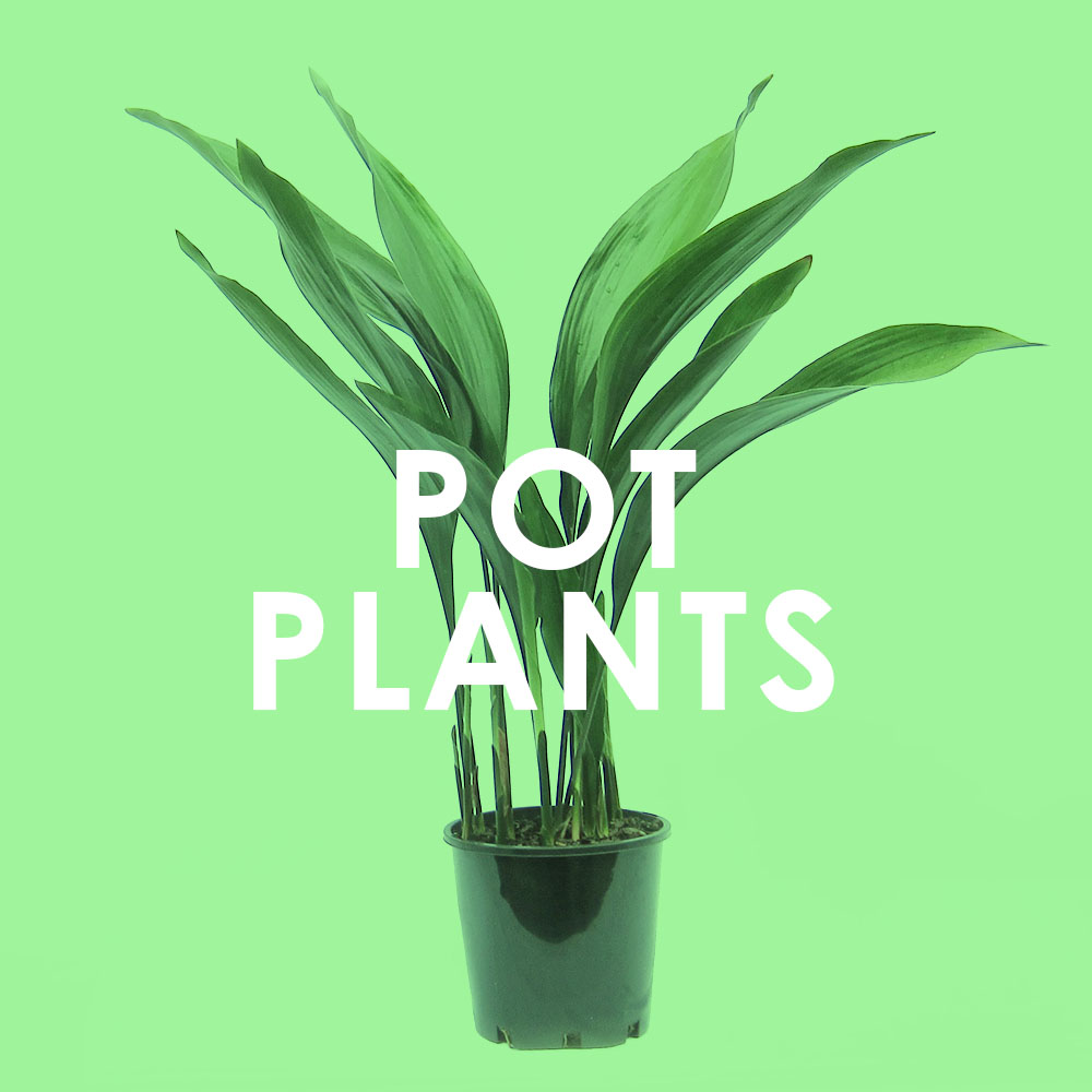 office indoor plants. Create An Oasis In Your Home Or Office With PlanterGarden. We Deliver Quality Indoor Plants, Pots And Planters To Door Within The Melbourne Plants