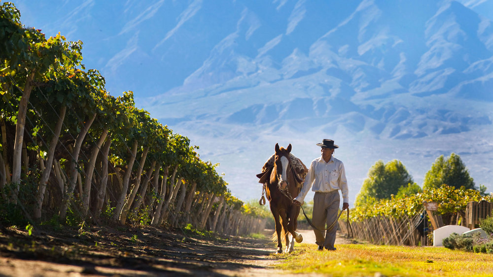 Vineyards of South America - 11-Day Tour From Buenos Aires to Santiago