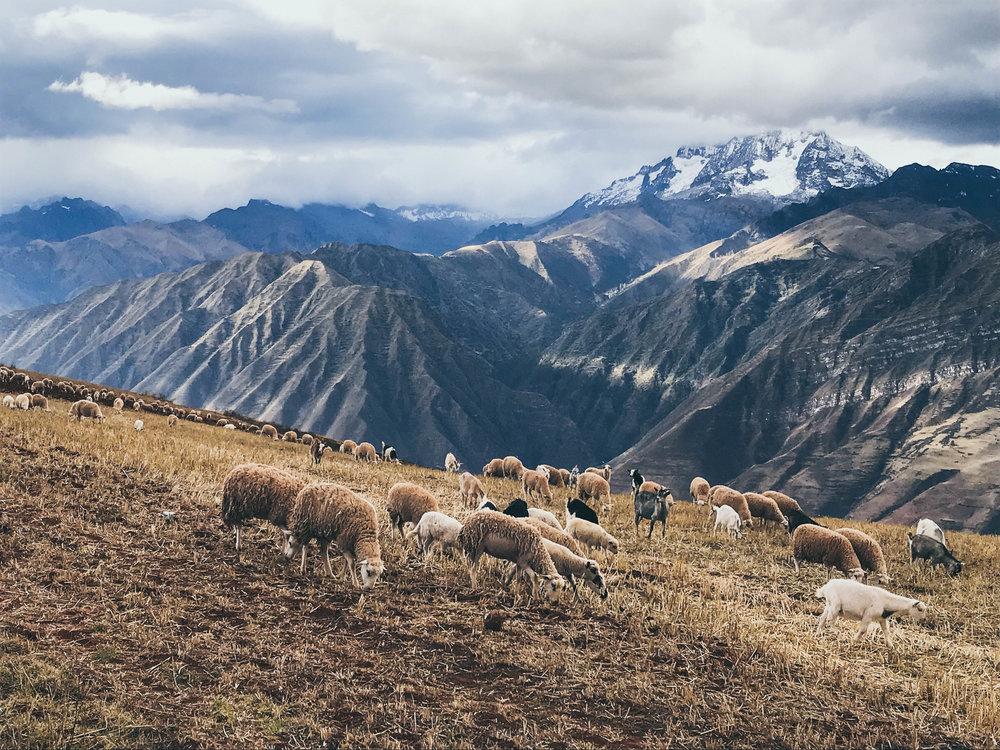 Sacred Valley, Machu Picchu, Inca  (10 of 13).jpg