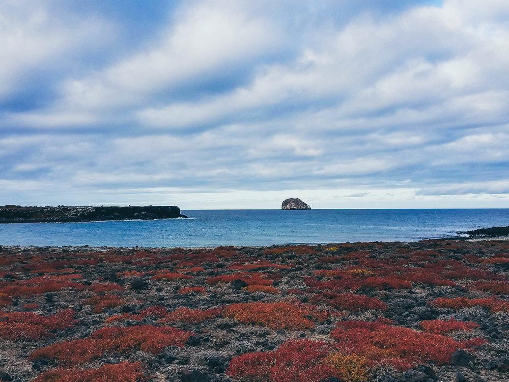 Galapagos Blog (4 of 12).jpg