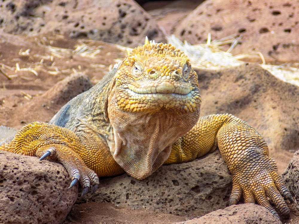 Ecuador and Galapagos Wildlife (10 of 15).jpg