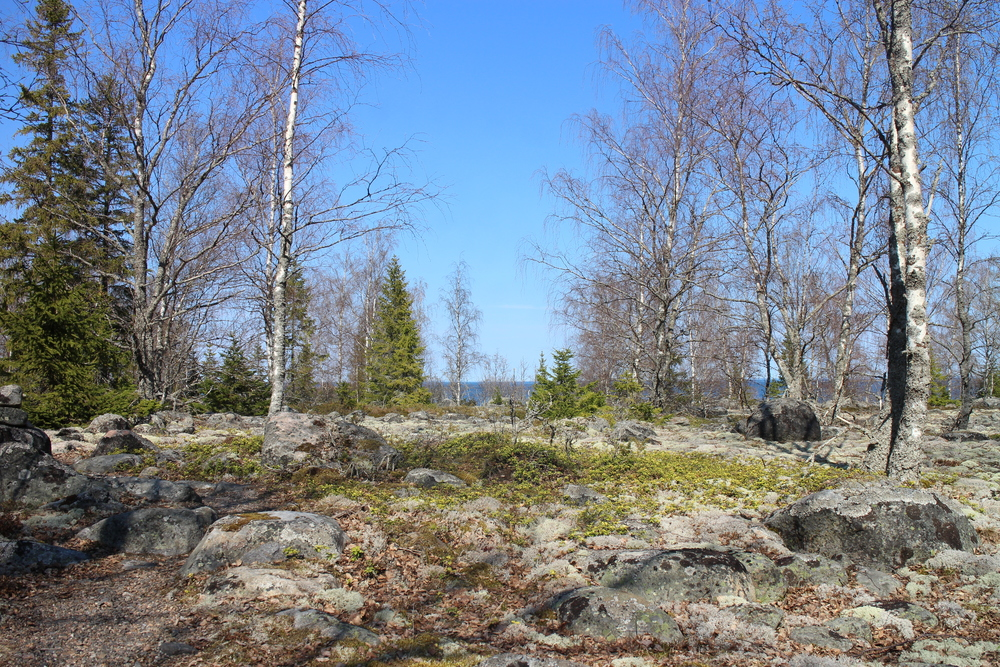 One of my favorite parts along the hike. This photo was taken in early May when the birch trees were still leafless.
