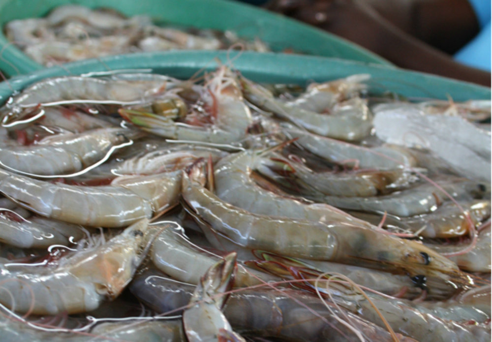 Fresh prawns at Maputo Fish Market in Mozambique.