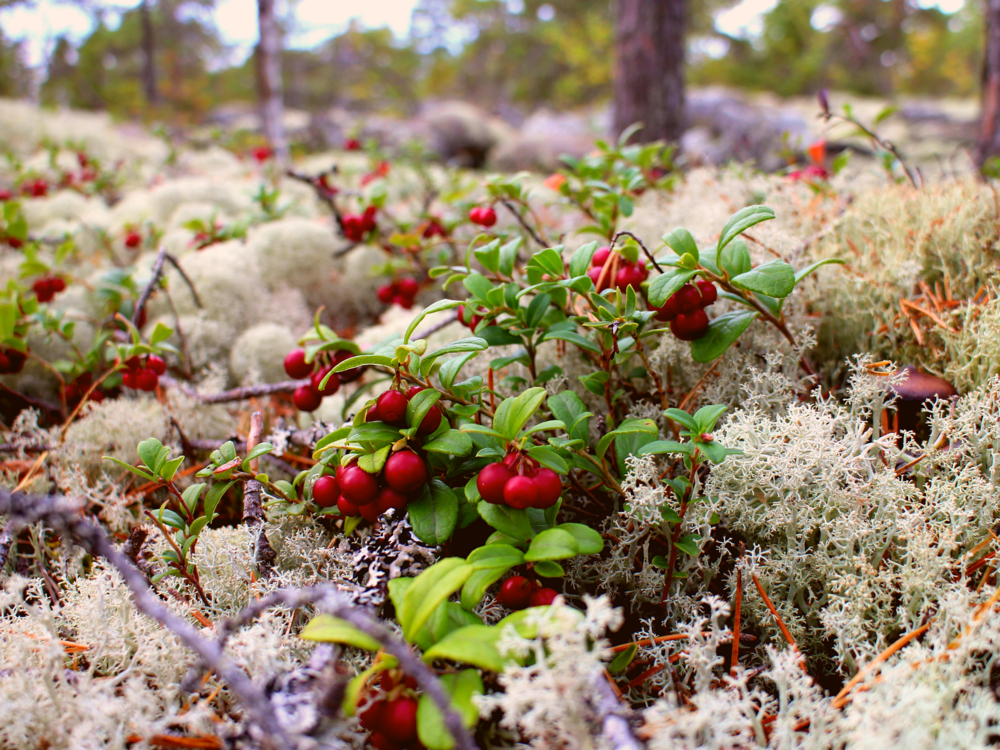 day trail or two-day hike in västerö - Grand rocks, quite steep ups and downs, and a real sense of wilderness that suddenly meets the sea, reddish pebbles and open landscapes − all these features describe well the rough beauty of nature paths going through protected area of Västerö. Here you can choose an easy and short route suitable for families or a bit more challenging and longer route if you are looking for deeper outdoor experience. Join us for a full-day or a two-day hike.