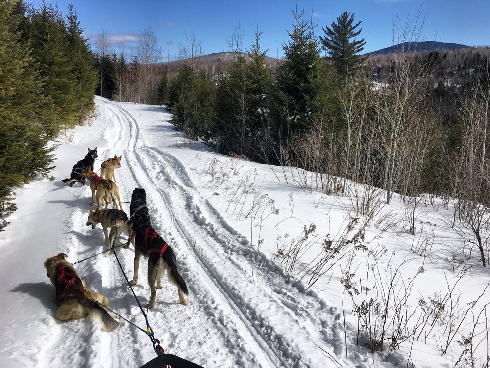 Wembley and Ariel in lead. Adventure off-trail run in spring 2017.