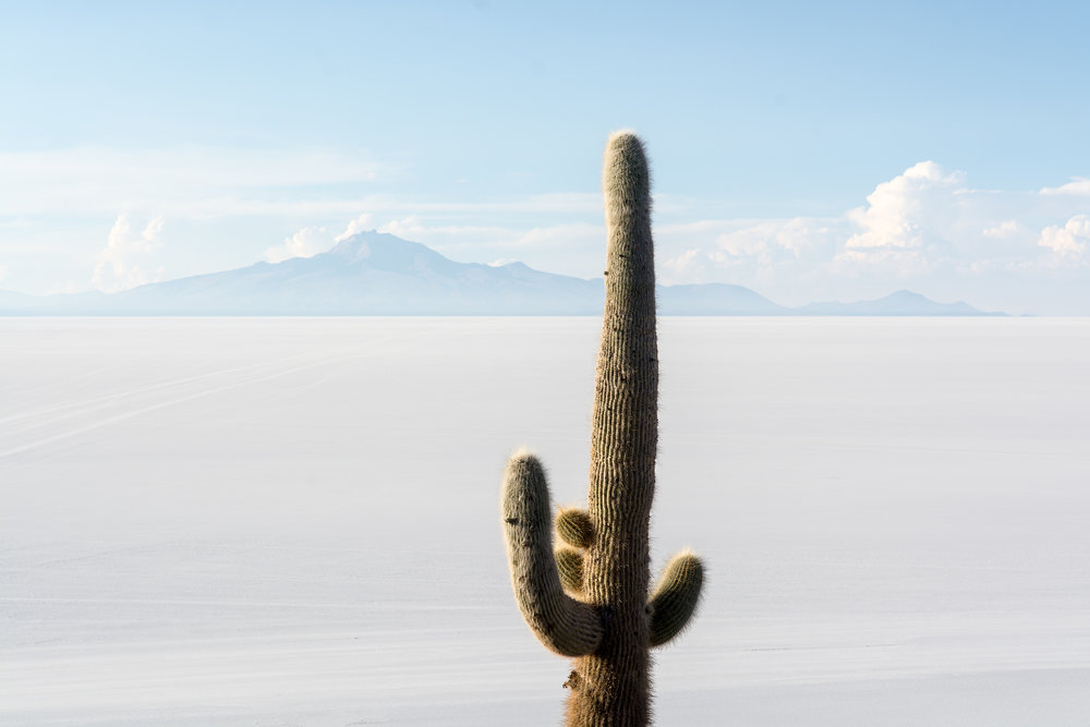 Cactus Bolivia_Print.jpg