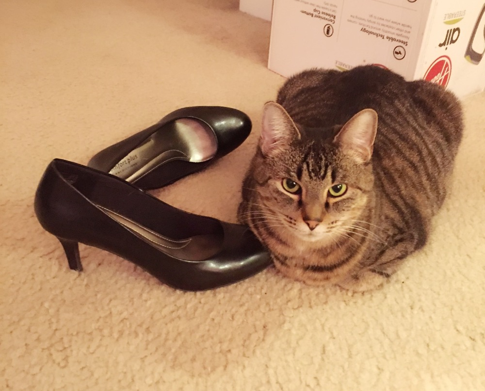 Bonus: Ruby  loooves  hanging out with shoes. Any shoe that ends up on the floor she will inevitably befriend. I find it hilarious so I have quite the collection of shoe+cat photos on my phone! Does anyone else's cat do this or is my cat just crazy?!