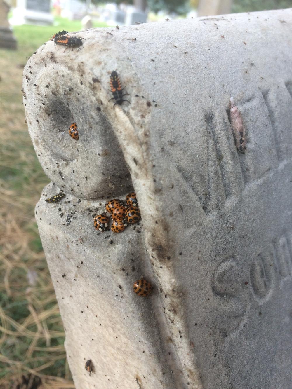 a ladybug haunt
