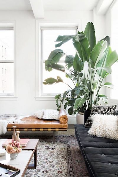 Houseplants1.jpg