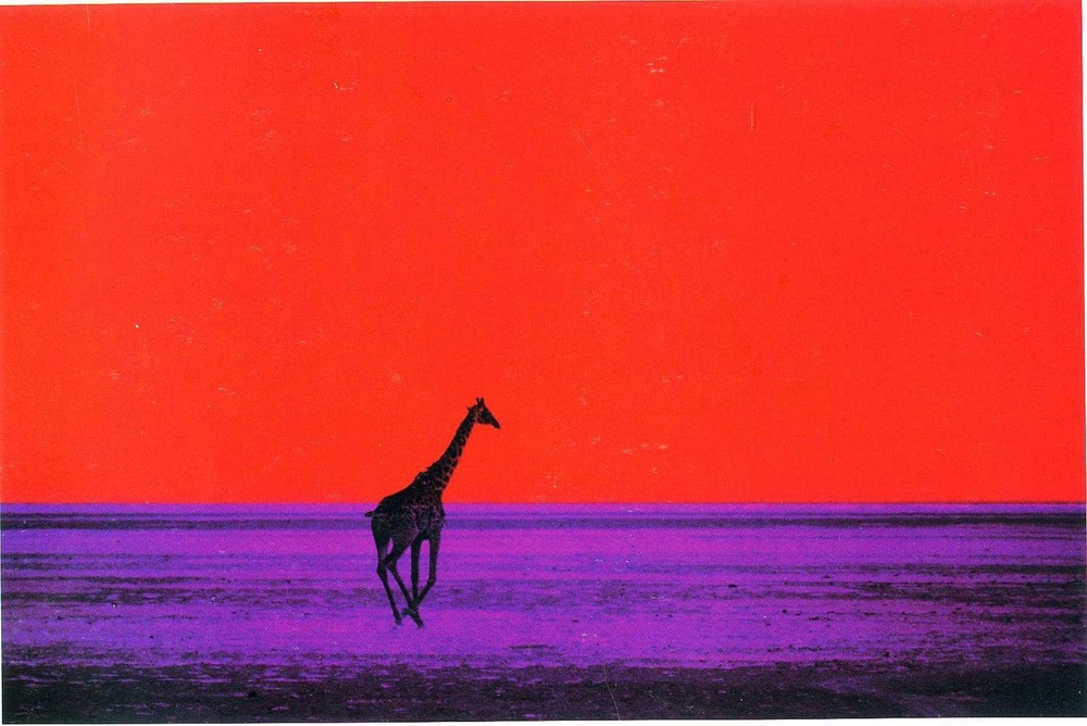 Giraffe, 1964 © Pete Turner