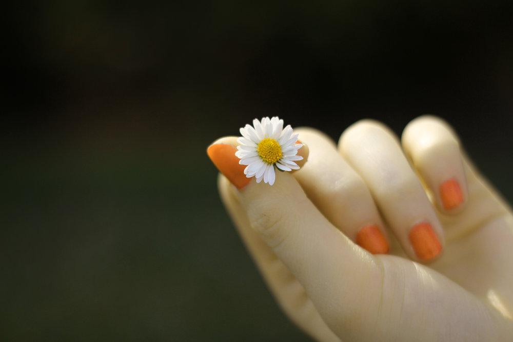 daisy hand.jpg