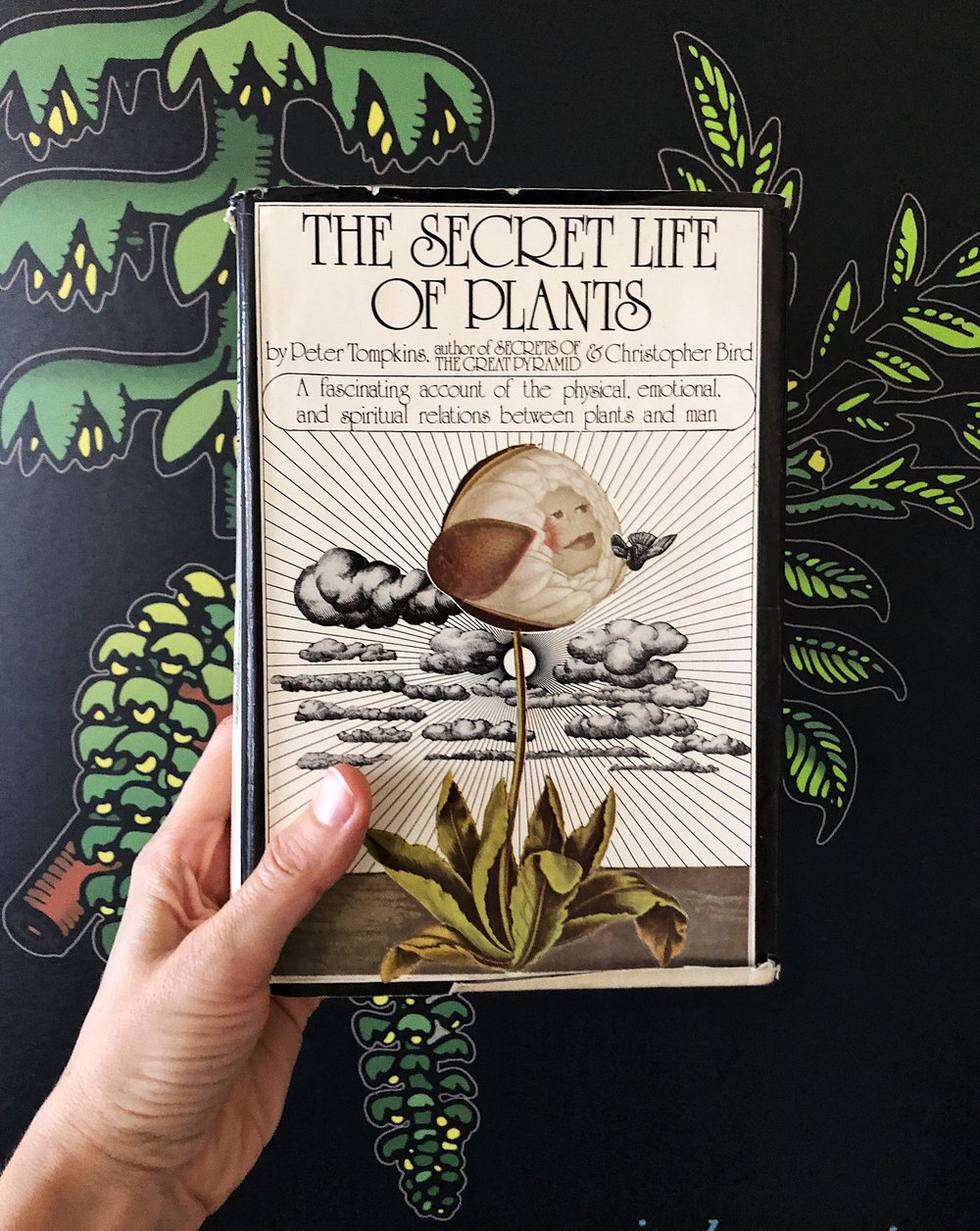 the-secret-life-of-plants-1973