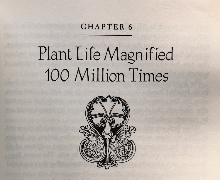 the-secret-life-of-plants-1973-botanical-illustration1.jpeg