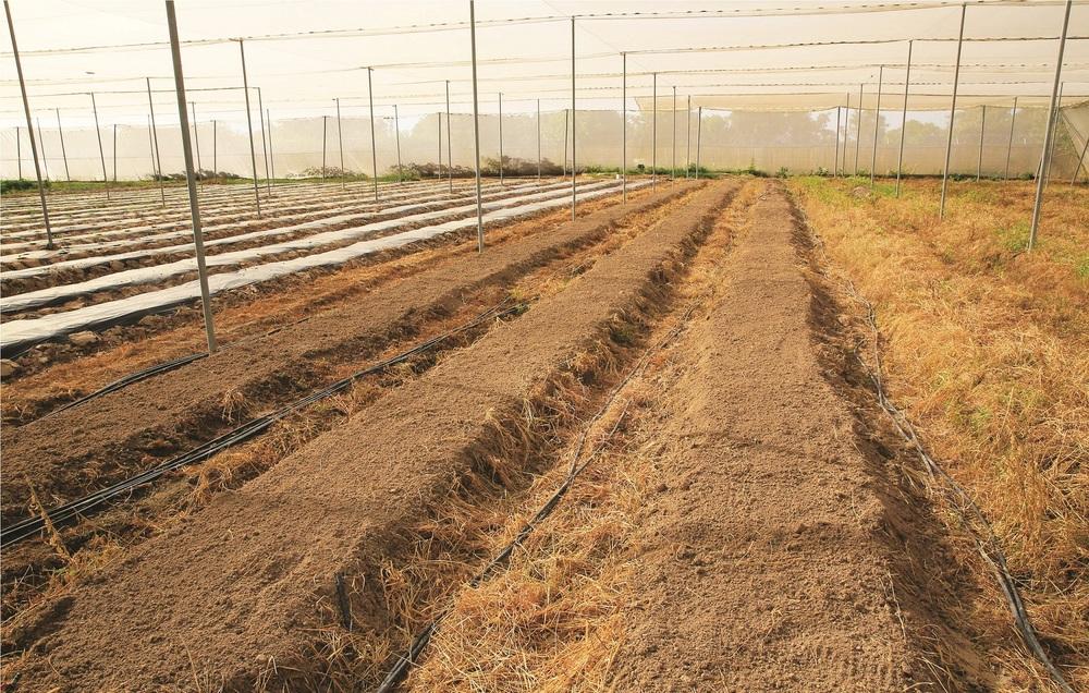 Tambaroua Business Farming - planches