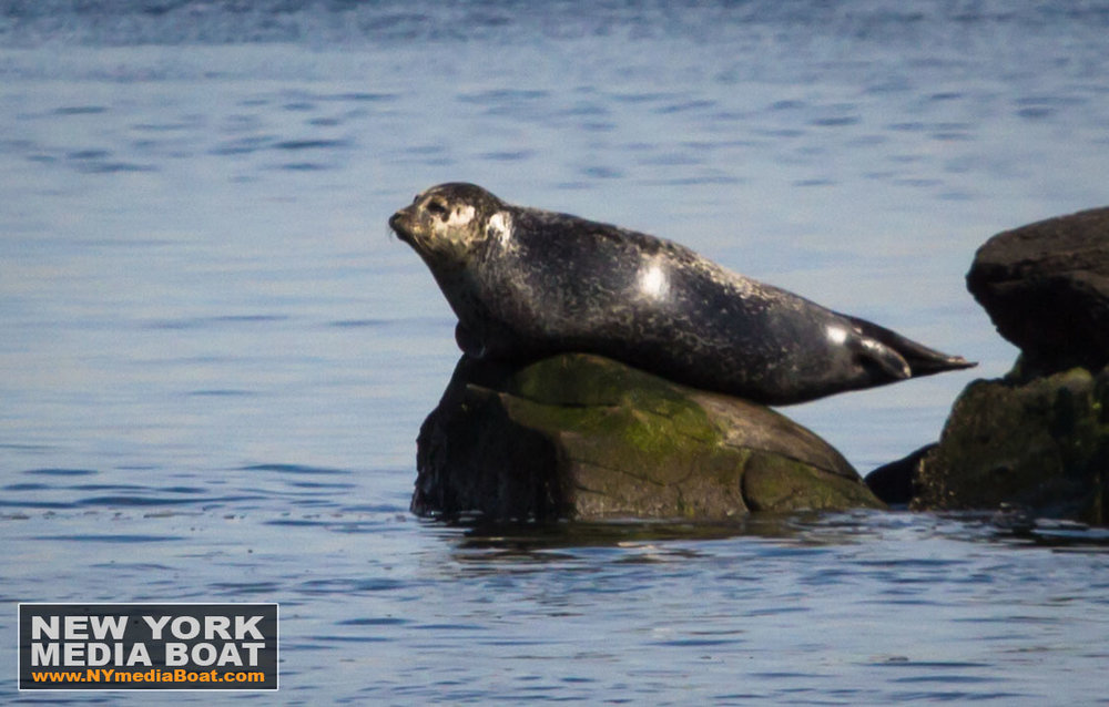 20140223_harbor_seals-7694_nymb.jpg