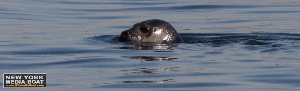 20140223_harbor_seals-7708_nymb.jpg