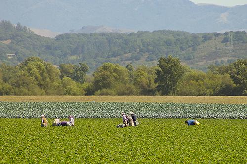 watsonville-farming.jpg