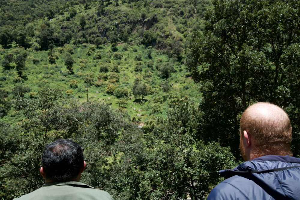 Marco (left) and Jesse (right) looking on the opposite side of the creek to a hillside of avocados.