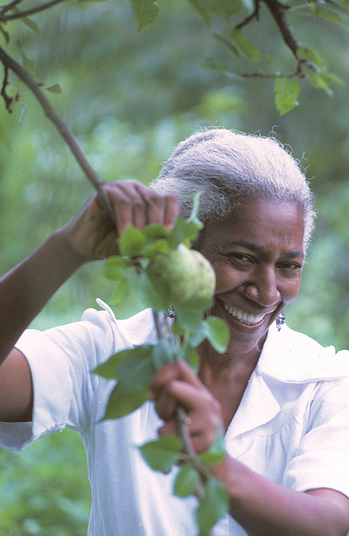 Edna Lewis in the pear orchard, Freetown community, 1971