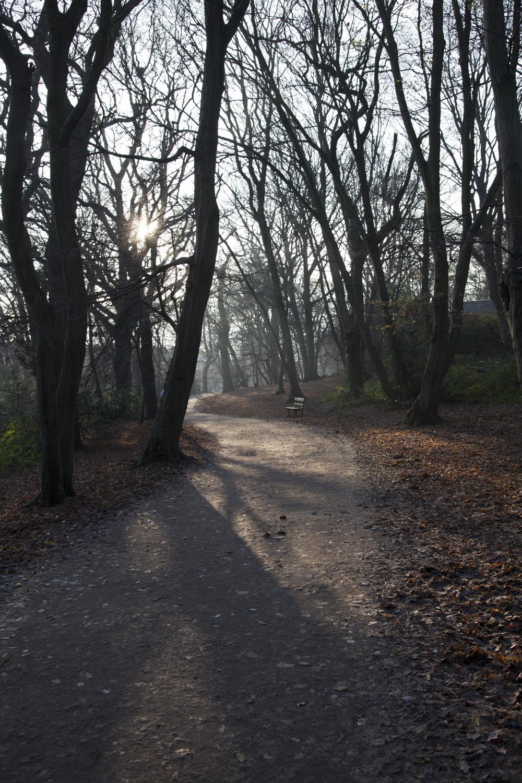 Highgate Wood.