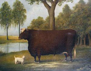 0-prize-bull.jpg