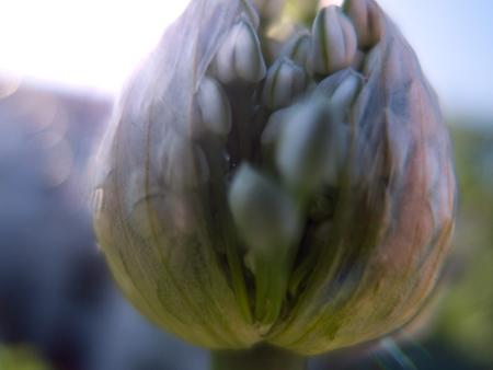 0-red-onion-2.jpg