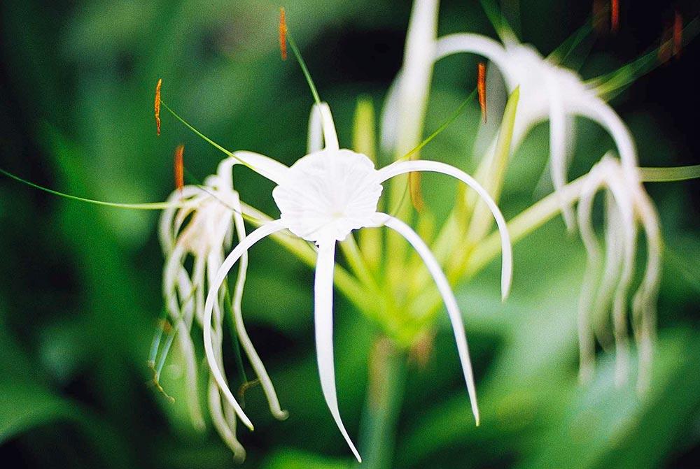 singapore-spider.jpg